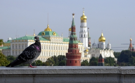 Pigeon and Kremlin